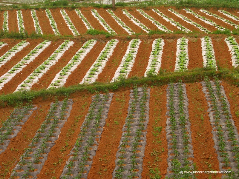 Yuanyang Agricultural Fields - China