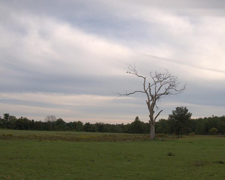 Jennings tree.jpg