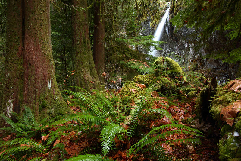 Whale Creek Falls and ferns, Clackamas Wilderness Area