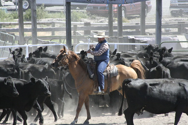 2010 WCSG Rodeo