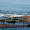 Seals Surfing - La Jolla - 1
