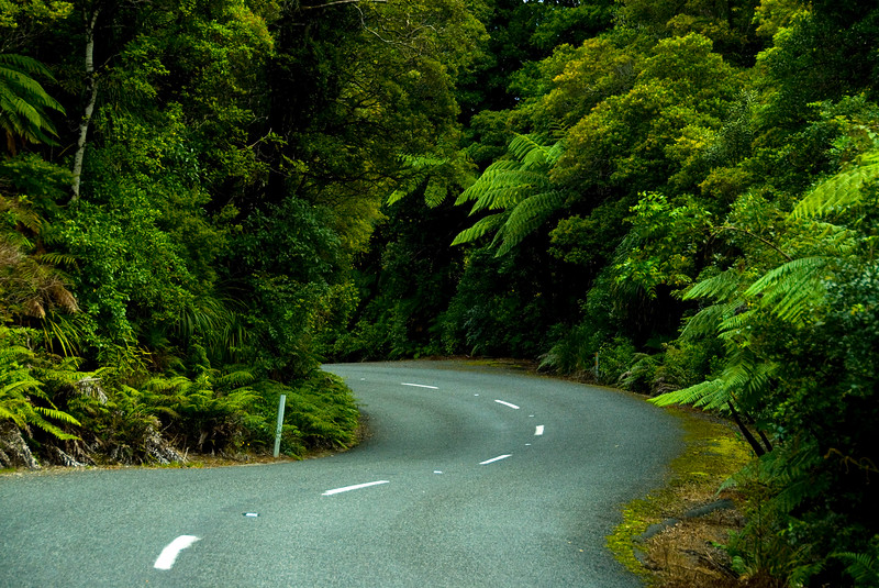 The winding road through Waipoua Forest, SH 16, Northland