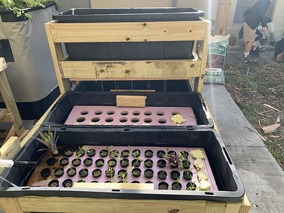 Hydroponics with High School