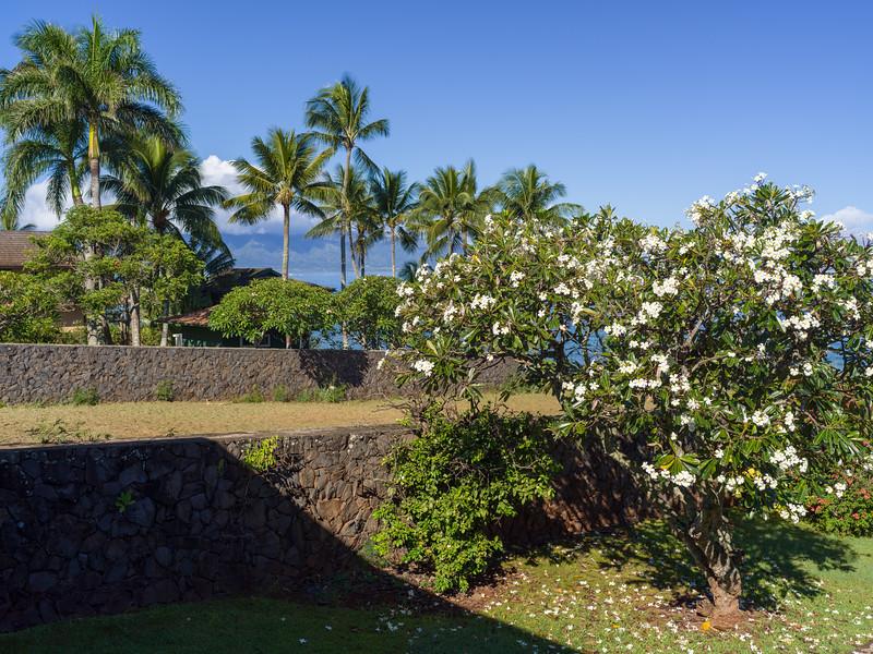 -Hawaii 2018-B1012993-20181014.jpg
