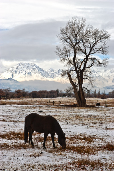 horse in snow bishop california.jpg