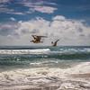 SeagullsDamNeck-003