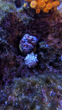 2019-04-23 - 3 new corals from Tidal Gardens