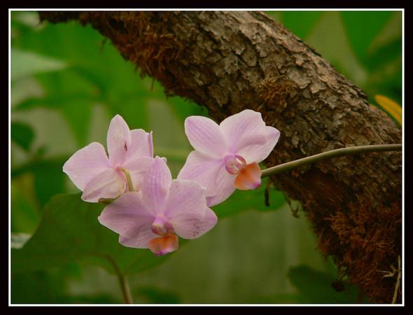 Les orchidées de Vincent (Martel - France)