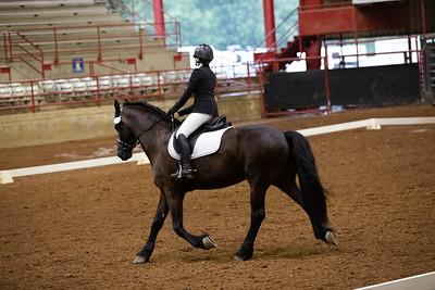 Horse 472