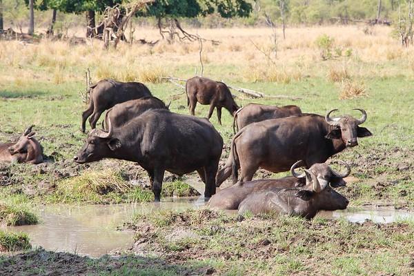 2015 - Zambia - Mosioa Tunya National Park