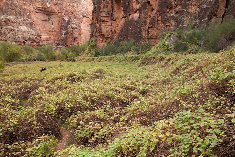 Grand Canyon October-0497.jpg