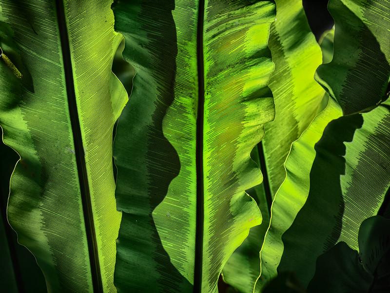 Leaves-SDFair-2012-PRT.jpg