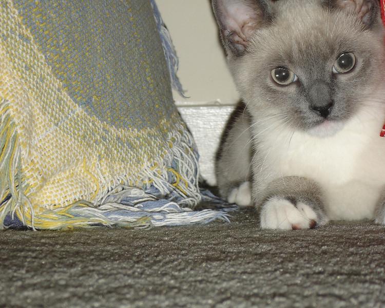 2007 06 22 - Cats 23.jpg