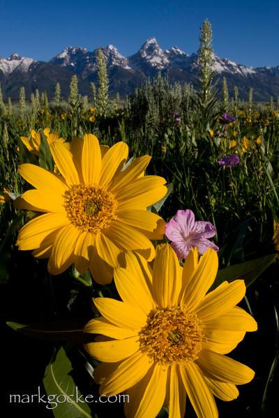 wildflowers-tetons1-mg.jpg
