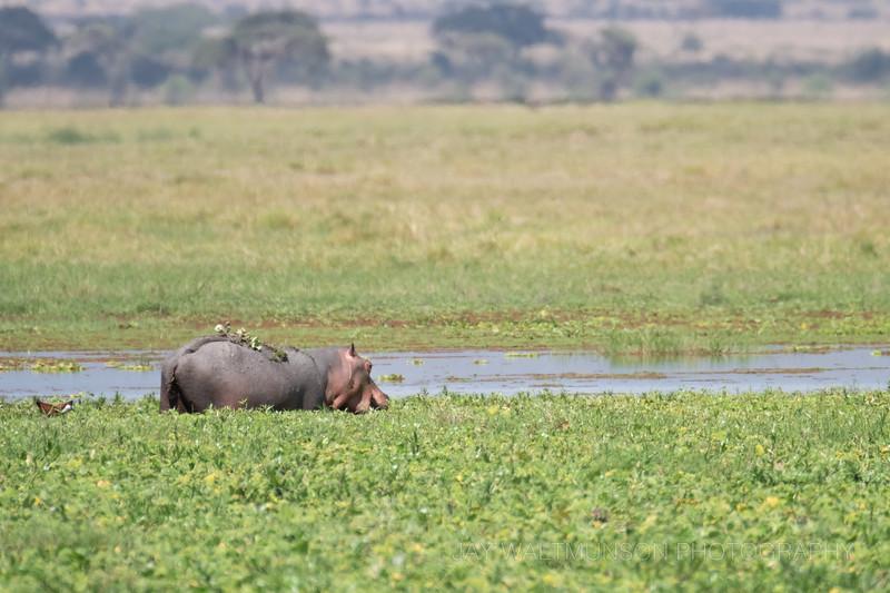Jay Waltmunson Photography - Kenya 2019 - 155 - (DSCF4421).jpg