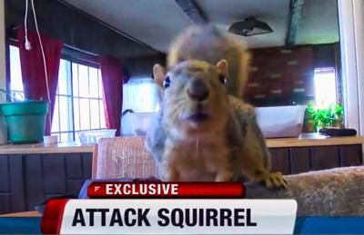 joey-the-indoor-pet-squirrel-guards-home-against-burglary