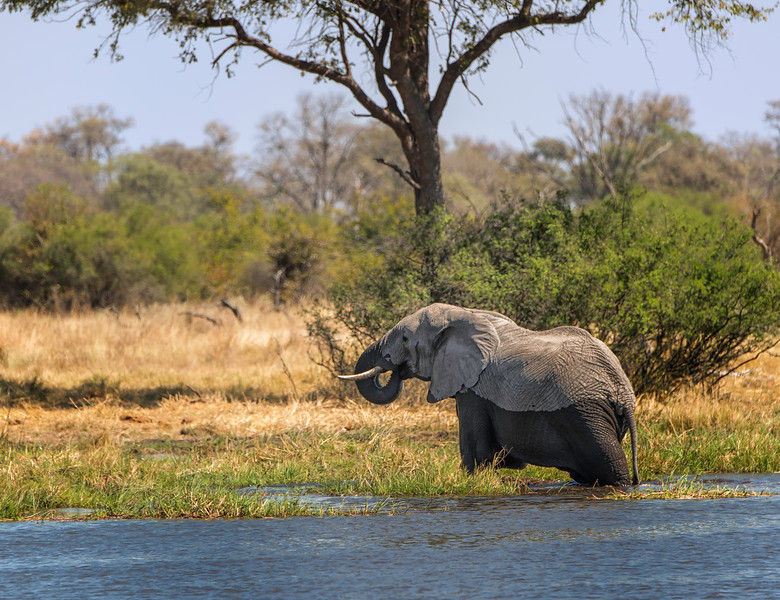 2014-08Aug-Okavango Masters-44-Edit.jpg