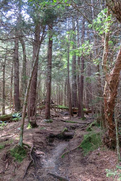 Mountains-to-Sea Trail -- 5,700'