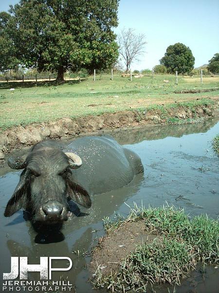 """""""Water Buffalo Hole"""",  Kajuraho, Madhya Pradesh, India, 2005 Print INDIA8-211V2"""