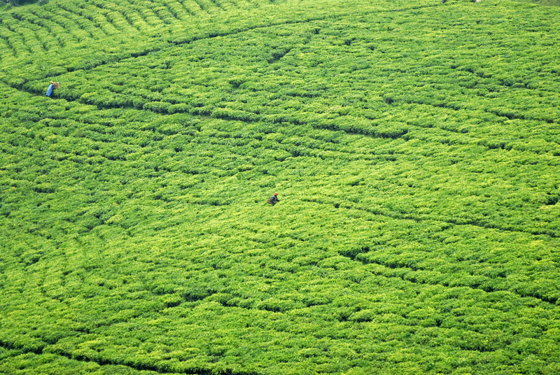 070113 4017 Burundi - Teza Mountains and Tea fields _E _L ~E ~L.JPG