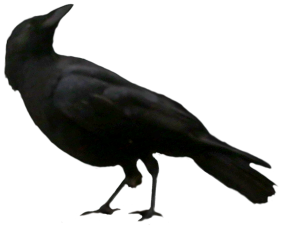 Raven 19.png
