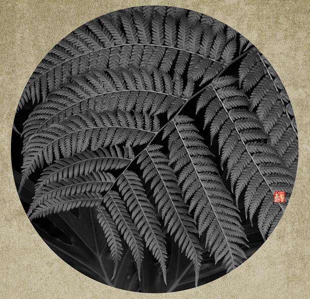 植物-5.jpg