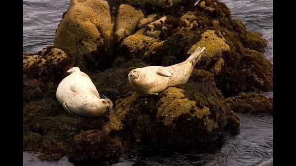 2005 - 03 - Monterey
