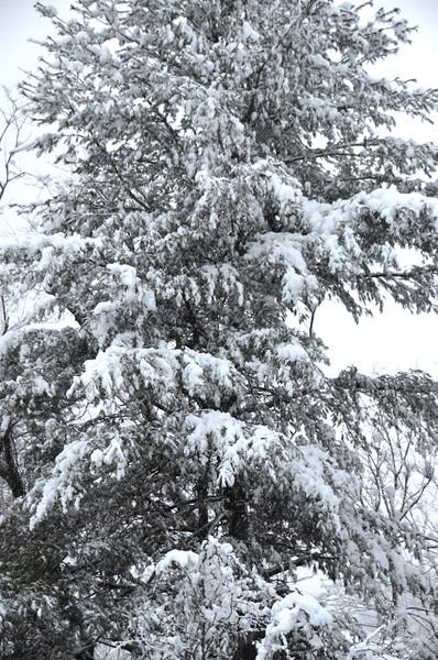 Snowfall 2014