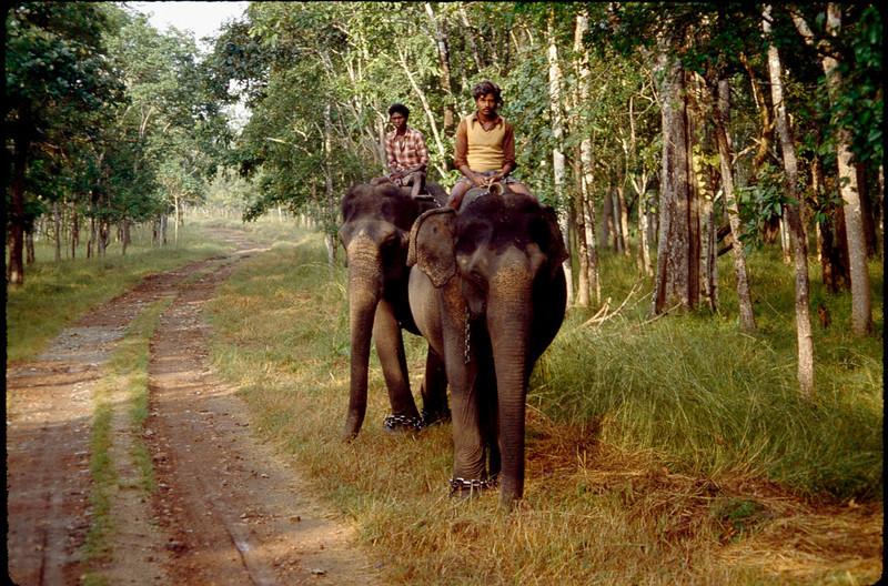worker elephants