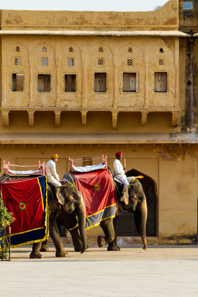 Elephants riding in amber fort - India - Rajasthan - Jaipur