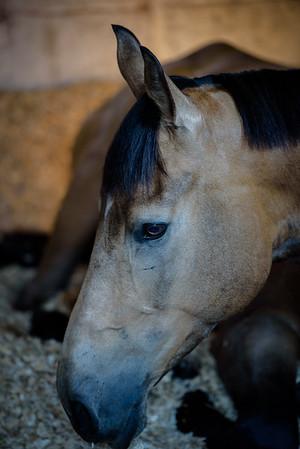 Equine Portfolio