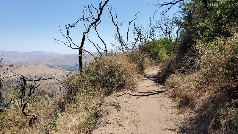 20190810020-Los Pinetos trailwork.jpg