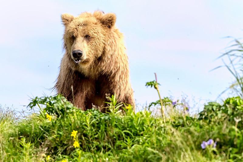 Alaska_2013_IG3A4366.jpg