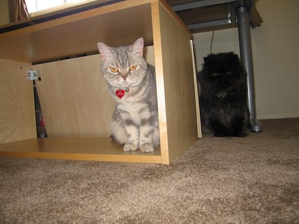 Mom's (Gail's) Kitty - Portia
