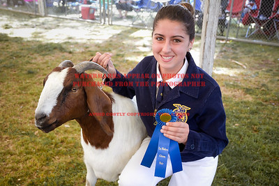2016 Citrus Fair - Goats