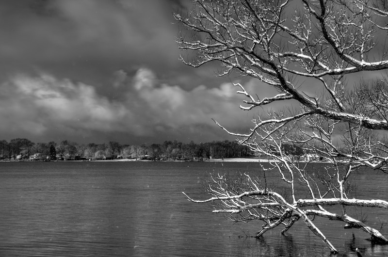Springfield-Lake-Branches-BW-Snow.jpg