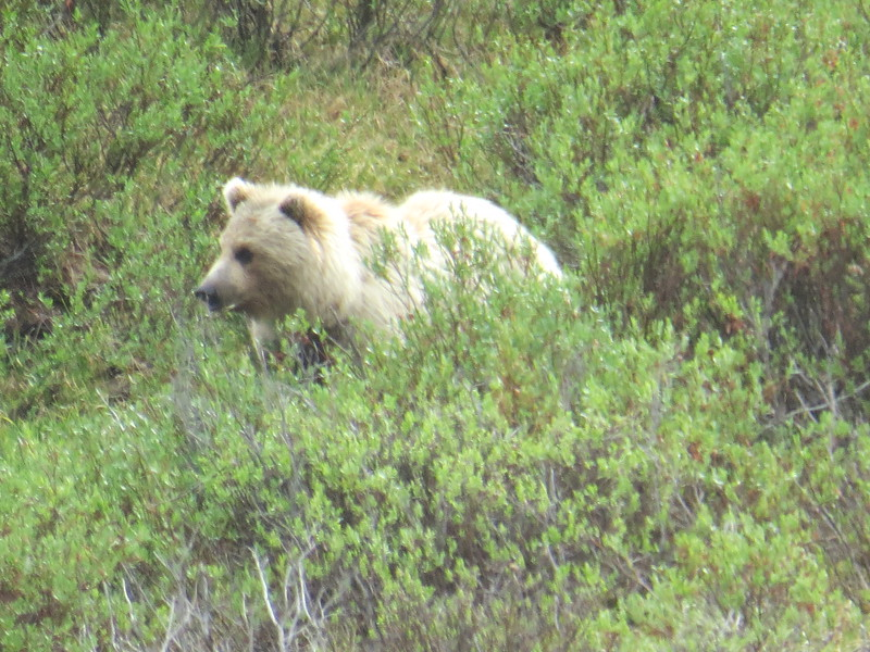 Princeton Journeys Alaska 2019 (10).JPG