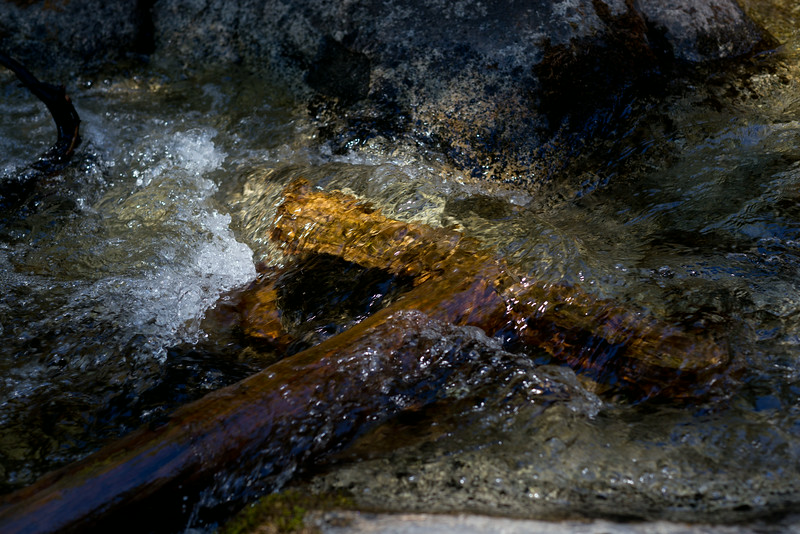 Sequoia_0446.jpg