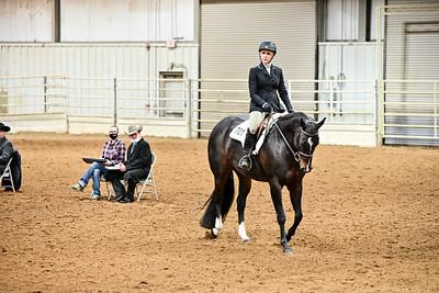 Amateur Equitation