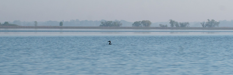 Red-necked Grebe Lake Osakis Douglas County Stevens County MN P1077121.jpg