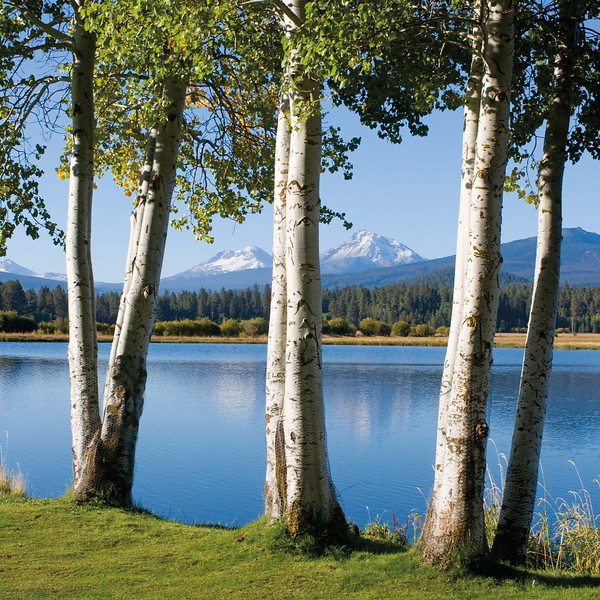 4.Rick Schafer Phalarope Lake aspens - was with orig proof_9781937139834_2016BBR_proof2_Page_08.jpg