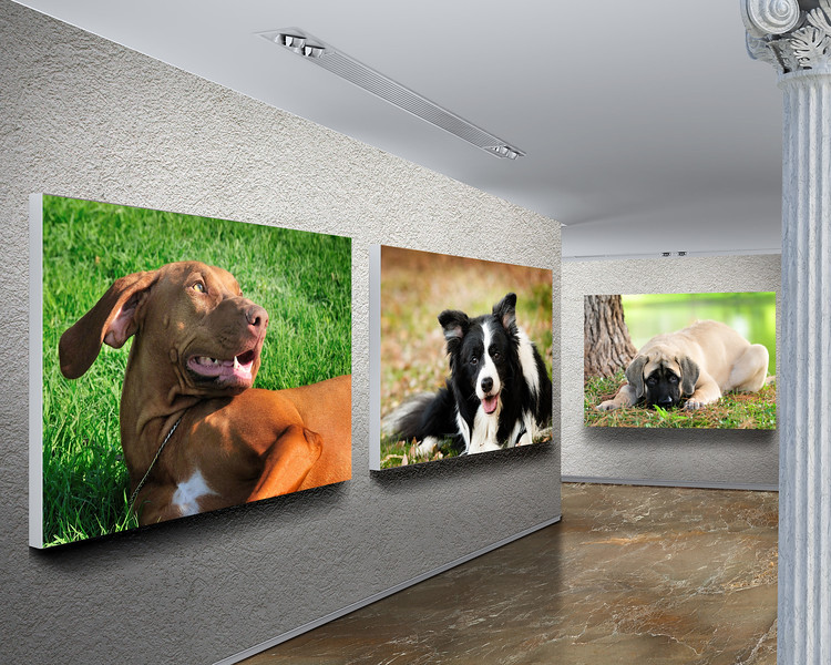 8x10 gallery.jpg