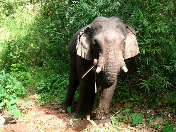 Hongsa and Elephants
