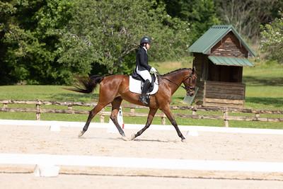 Horse 380
