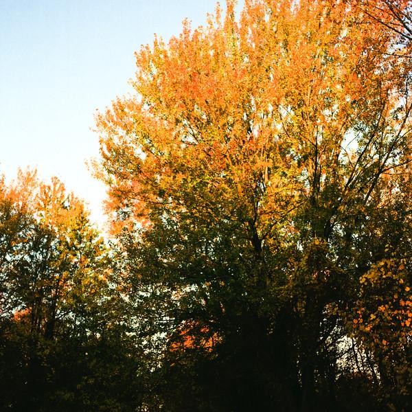 Autumn Hike 120 Film-00005.jpg