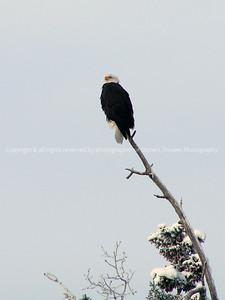 025-eagle-chugiak_alaska-03dec06-cvr-1454