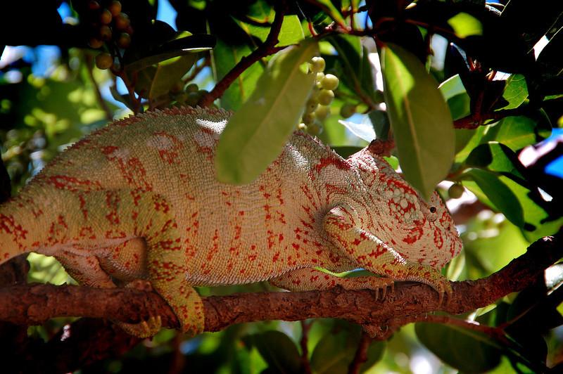 Madagascar, Fauna & Flora 20 Oda.jpg