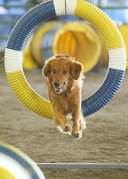 10-31-2015 Border Terrier-2405.jpg