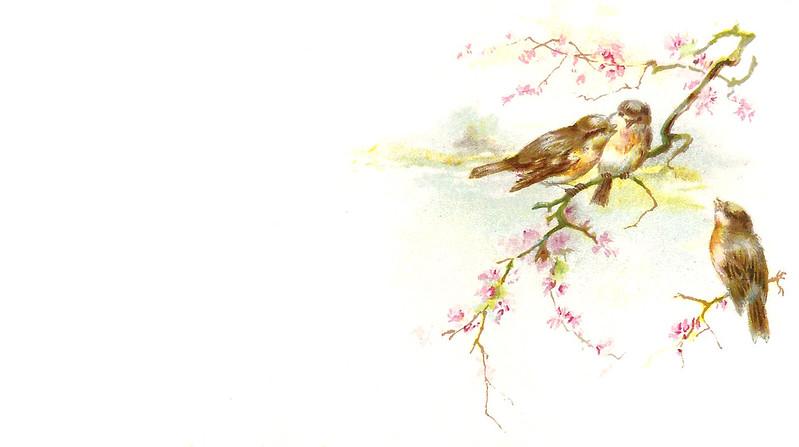 bird-fruit-blossom-border.jpg