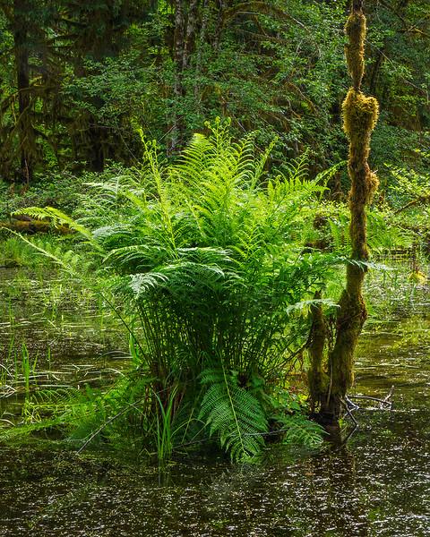 Fern on a bog
